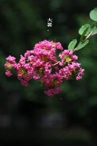 『流年*洗我愁肠』紫薇。鸢尾(微诗组诗)