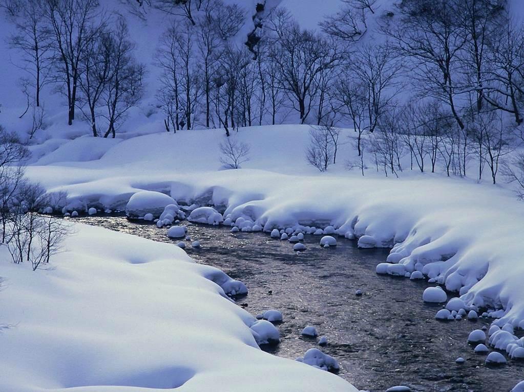 【军警】冬韵,绽放心灵一抹绿(散文)